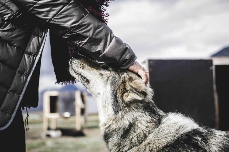 Stephanie Sonderegger mit einem Husky (Kontiki Reisen in der Arktis)
